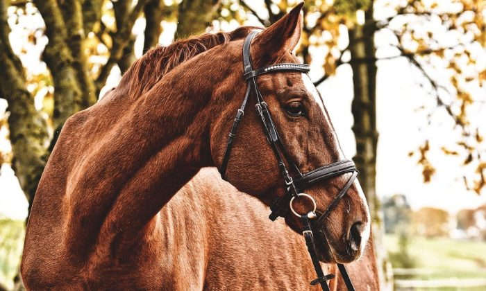 An Ode to My Grandfather's Horse Updivine