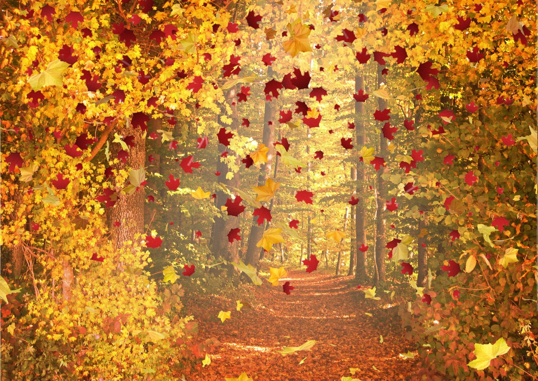Fall | A nature poem by Mystqx Skye at UpDivine