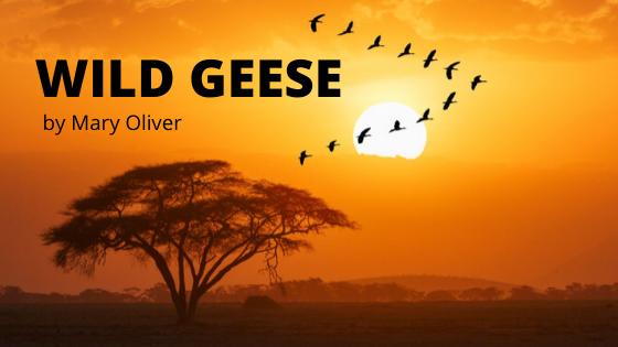 Wild Geese mary oliver
