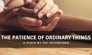 The Patience of Ordinary Things by Pat Schneider