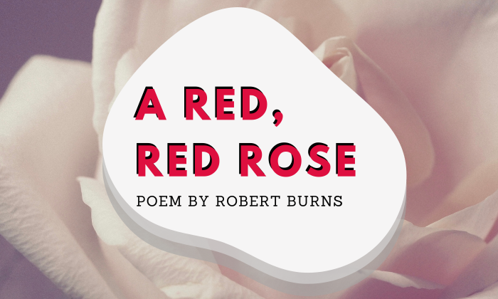 A Red, Red Rose by Robert Burns